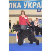 dog exhibition, Ukraine